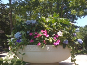 spring annual containers