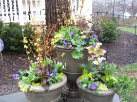 Spring Annual Container