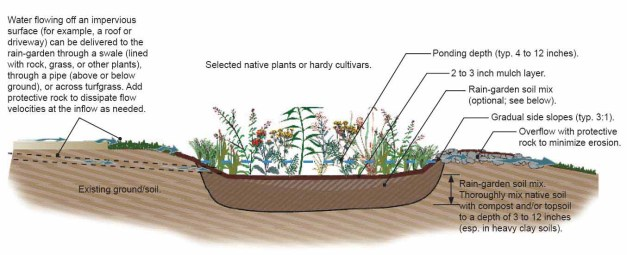 cross section of a rain garden