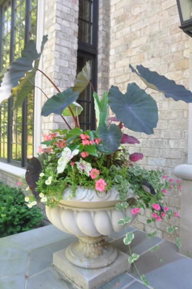 shade annuals in pot