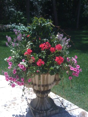 Summer Annual Container