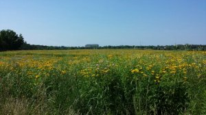 prairie land with yellow flowers