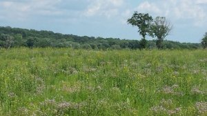 savanna land with wildflowers and trees