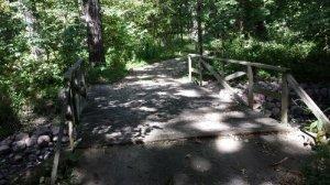 wooden bridge in woodland area