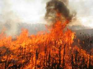 prairie controlled burn fire