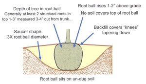 summary of how to plant a tree