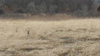 prairie in early spring