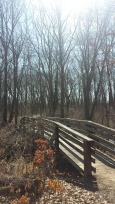 wooden bridge in forest in winter