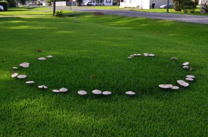 Fairy ring with mushrooms blooming