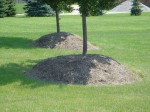 mulch piled onto trunk of tree