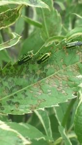 4 lines plant bug