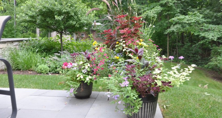 summer annual containers on bluestone patio